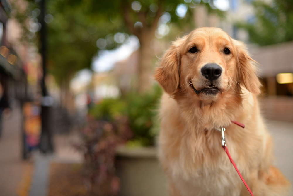 A review of existing research found that when it comes to mental health, pets seem to help more than they harm.