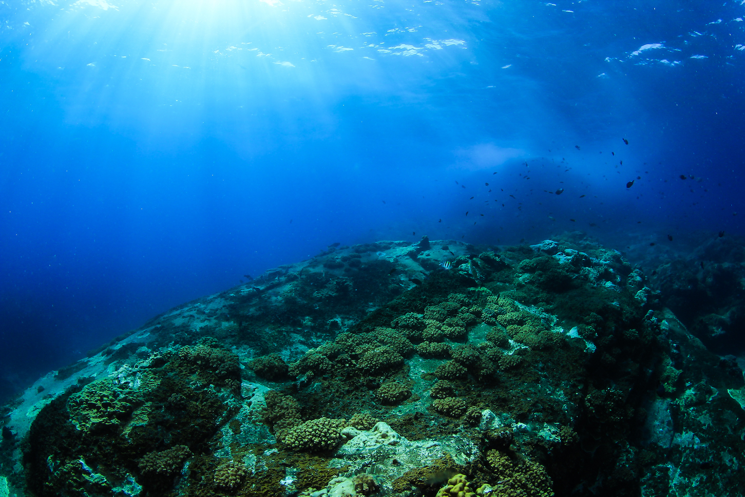 Researchers have discovered a connection between atmospheric carbon dioxide cycles and the shifting amount of CO2 stored on the seafloor.