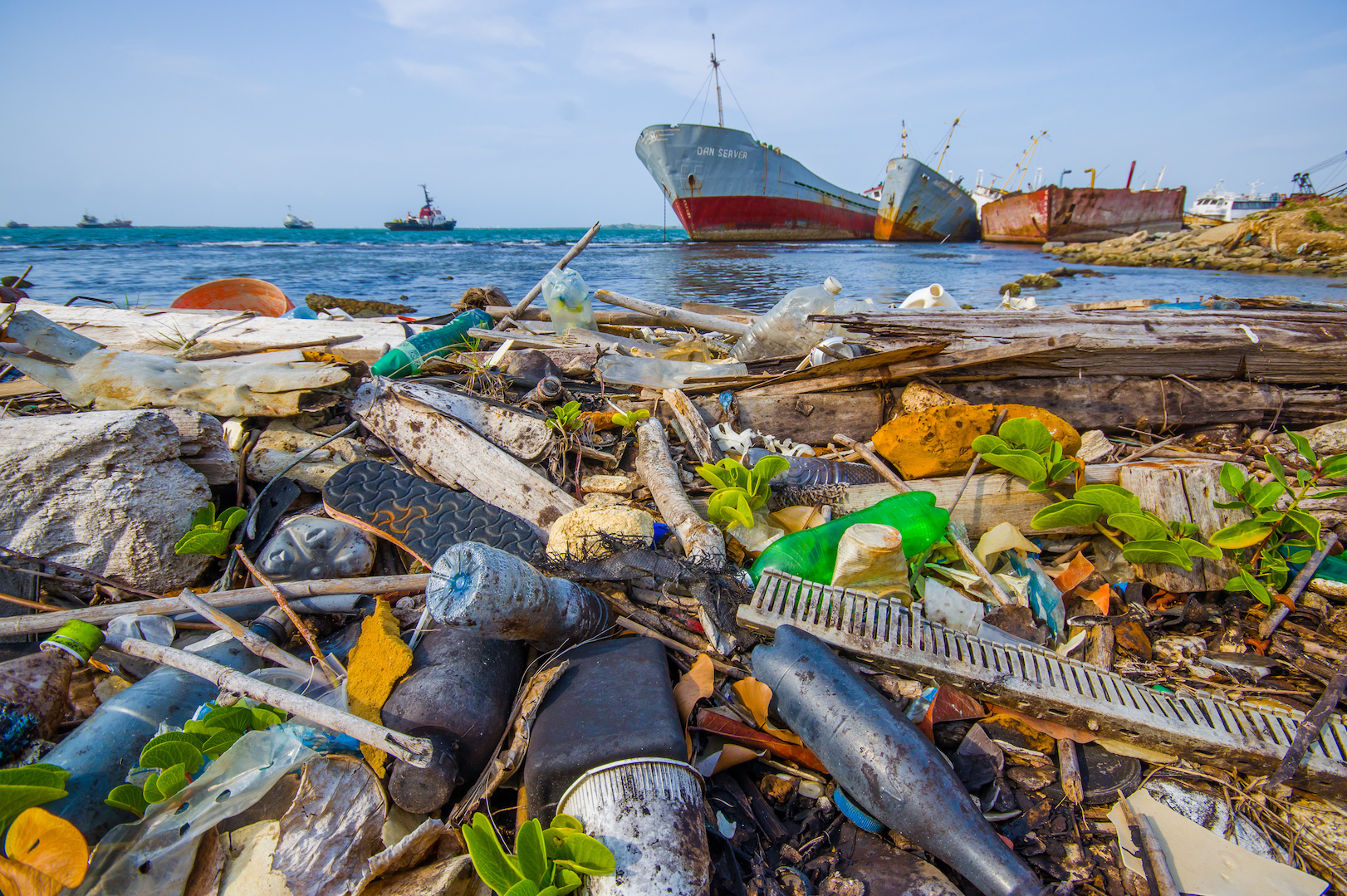 A troubling new study has found plastic particles in 73 percent of deep sea fish in the northwest Atlantic Ocean.