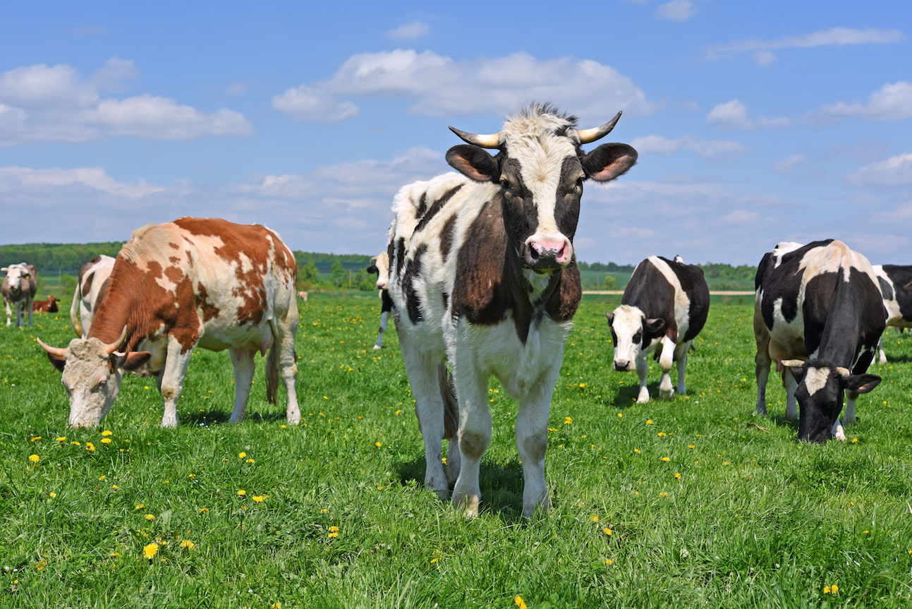 Yearly changes in rainfall are limiting the ability of vegetation to support large herds of grazing farm animals.