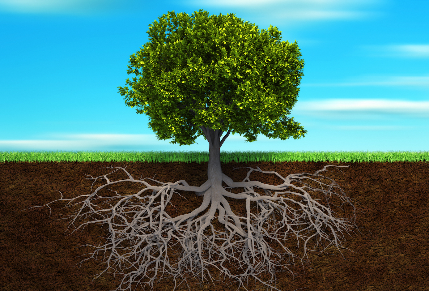 Experts propose that plants adapted their roots underground as they evolved to make themselves more efficient and independent.