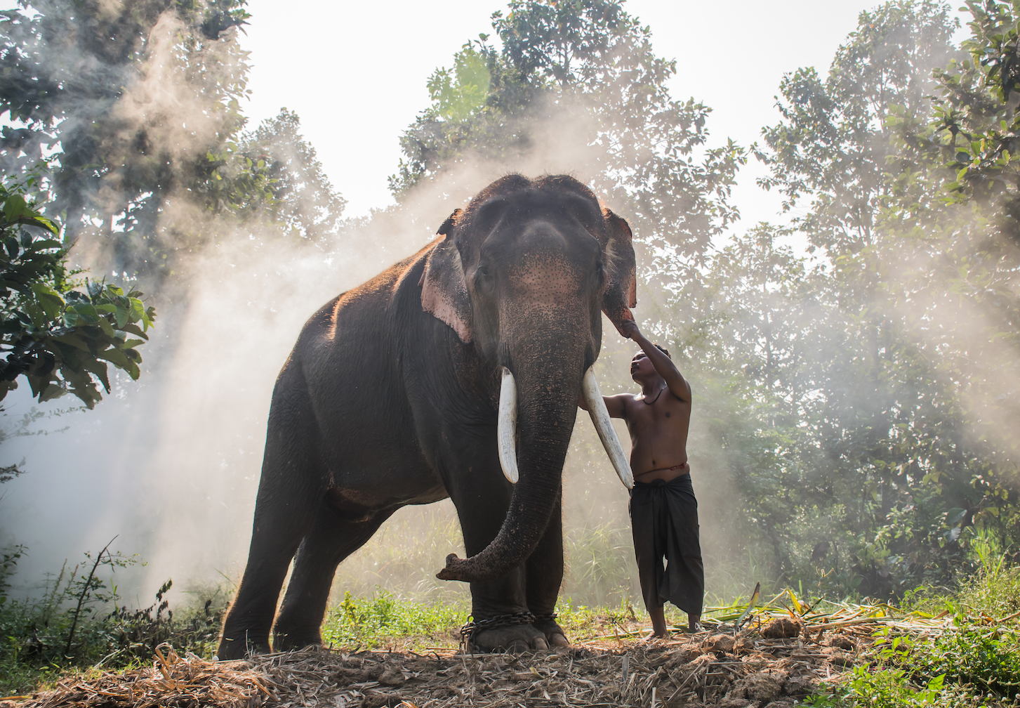 A new study has found that elephants have distinct personalities, and some in a herd may be more outgoing, or attentive.
