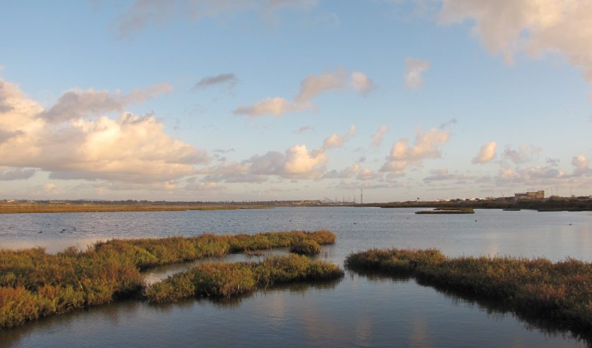 The majority of coastal wetlands along California, Washington, and Oregon could be drastically reduced even under moderate sea level rise.