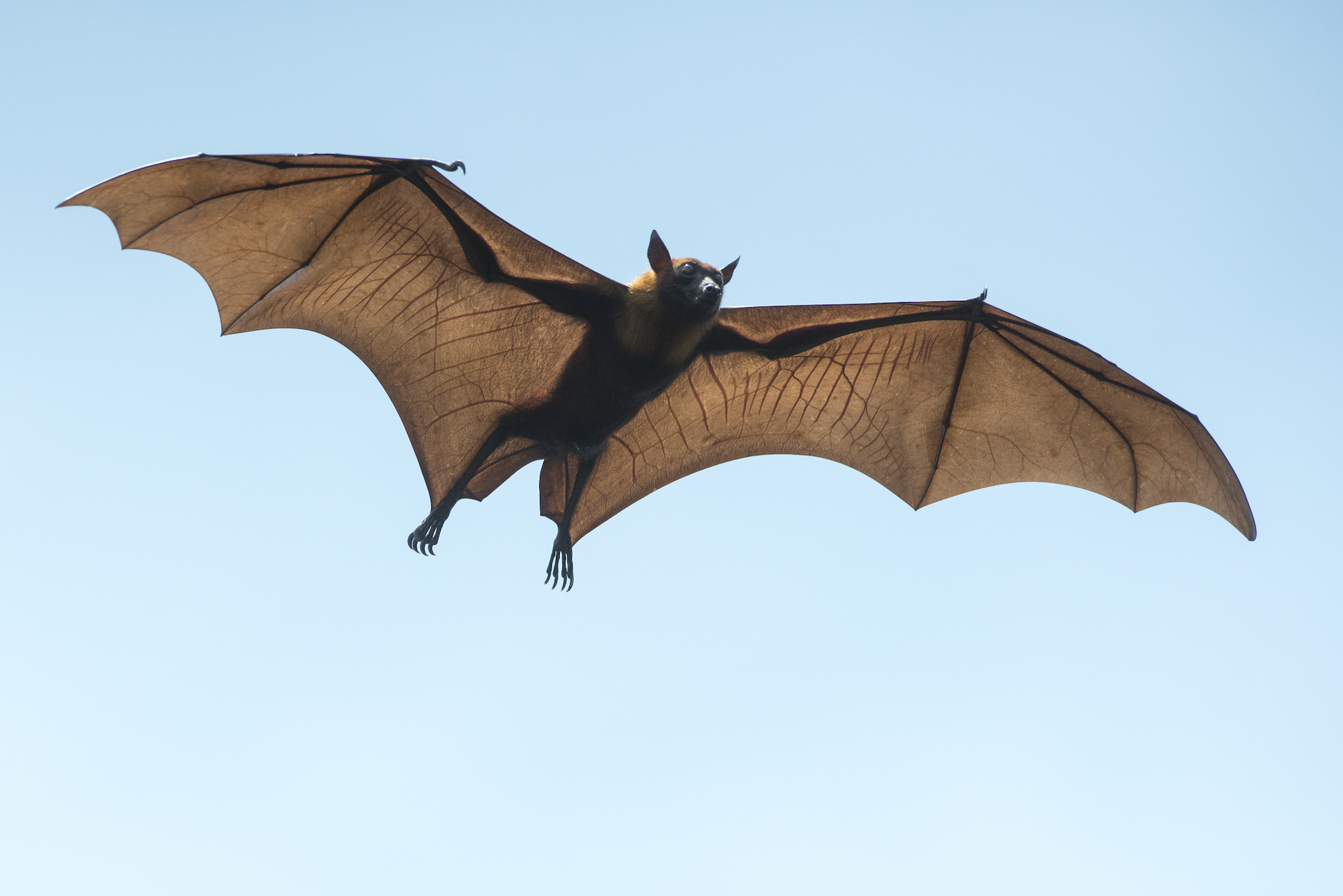 how to get rid of bats at night