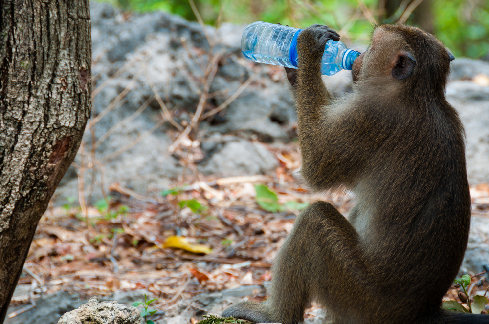 A new study of rhesus macaques found they prefer brand logos they connect to status or sex.