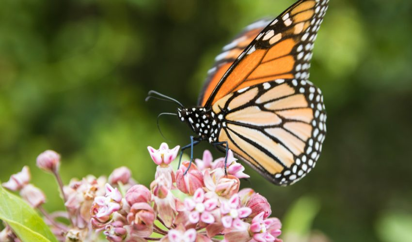 A pollinator garden full of flowering native plants is a great way to help bees, butterflies and other animals.