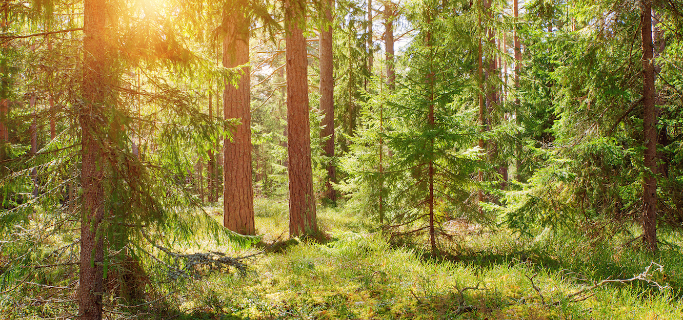 Researchers have calculated how much carbon could be accumulated in American forests if they were strengthened through reforestation efforts.