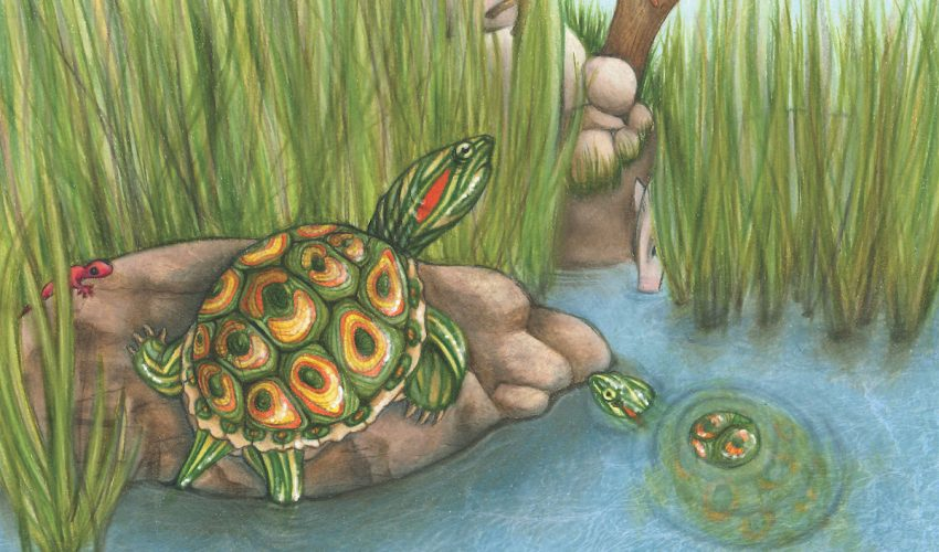 A new species of extinct turtles dating back 5.5 million years was recently discovered by a paleontologist from the University of Pennsylvania.
