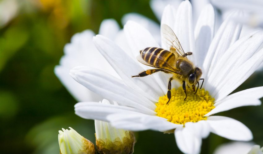 The European Union is calling for a ban on neonicotinoid pesticides after it was confirmed that the chemicals are severely harmful to bees.