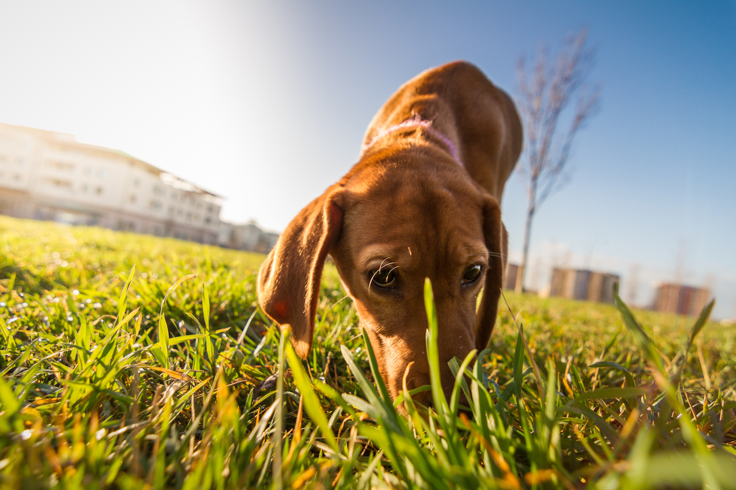 Scientists at the Max Planck Institute for the Science of Human History have now found evidence that dogs create a mental image to represent a scent that they are tracking.