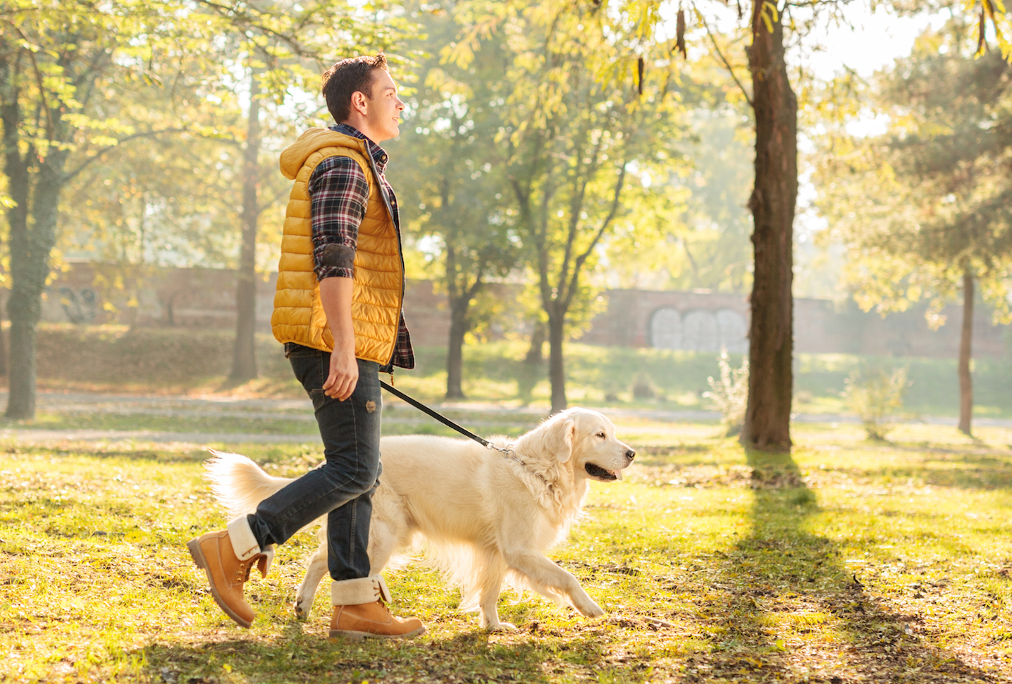 Researchers have found that owning a dog can make you appear happier, more attractive, and more approachable to others.
