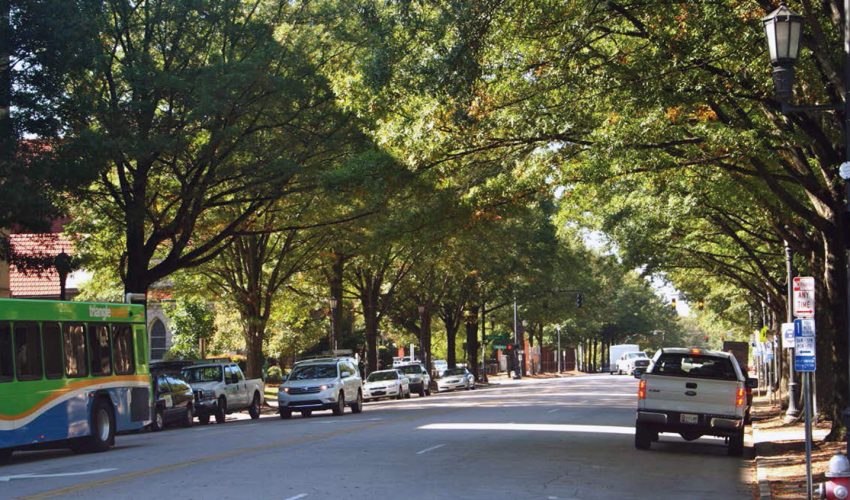 Researchers are reporting that city trees have a much better chance of surviving threats from heat and insect pests if they are hydrated.