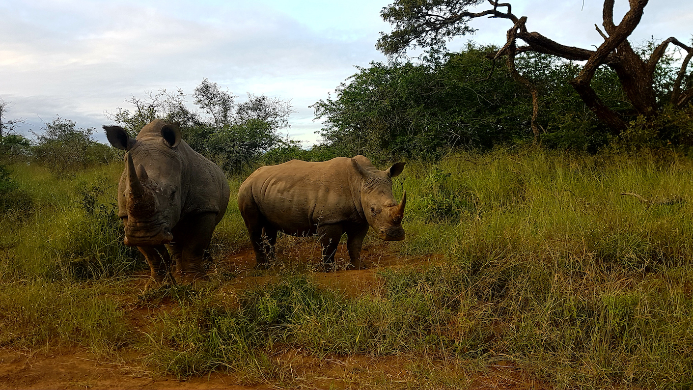 The illegal wildlife trade, which poses a major threat to biodiversity conservation, has now become more easily accessible through the use of social media.