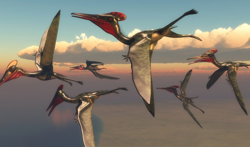 A new analysis has revealed that there was still exceptional diversity among pterosaurs at the time they were driven to extinction.