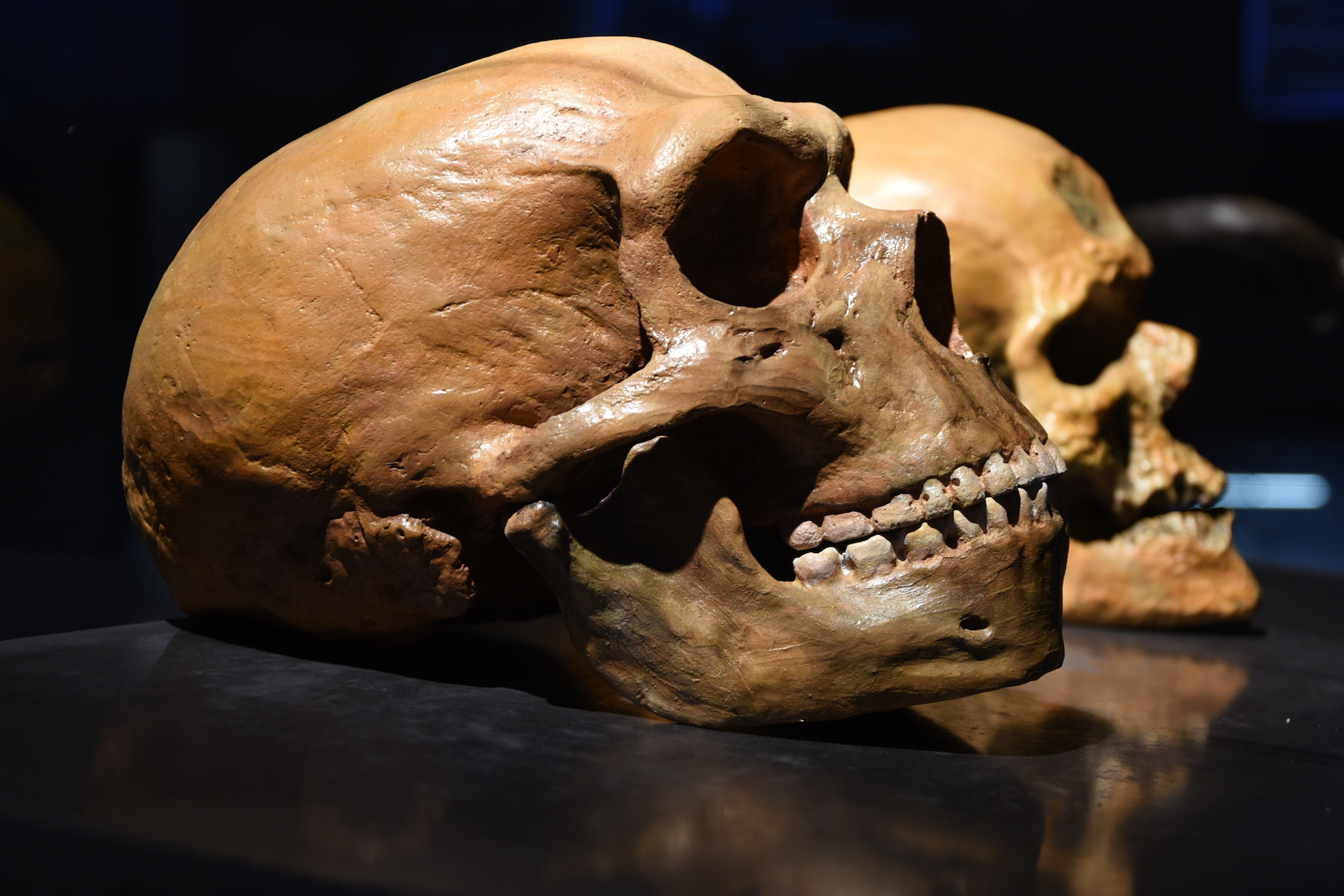 Recent research has suggested that Neanderthals may have been much more caring and compassionate than previously thought.