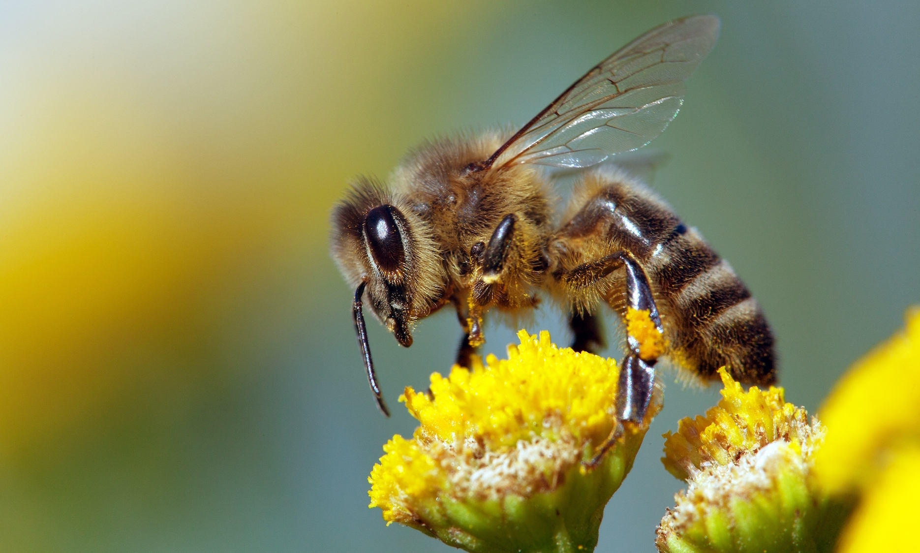 A new study represents an important breakthrough that could help in the creation of pesticides that are not toxic to bees.