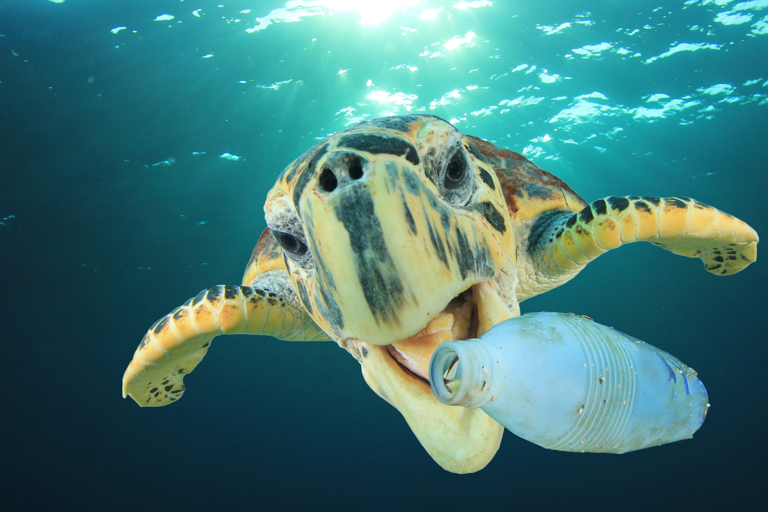 A new report predicts that the amount of plastics in the Earth's oceans will triple in the next ten years, with 150 million tons of plastic pollution littered in the seas by 2025.
