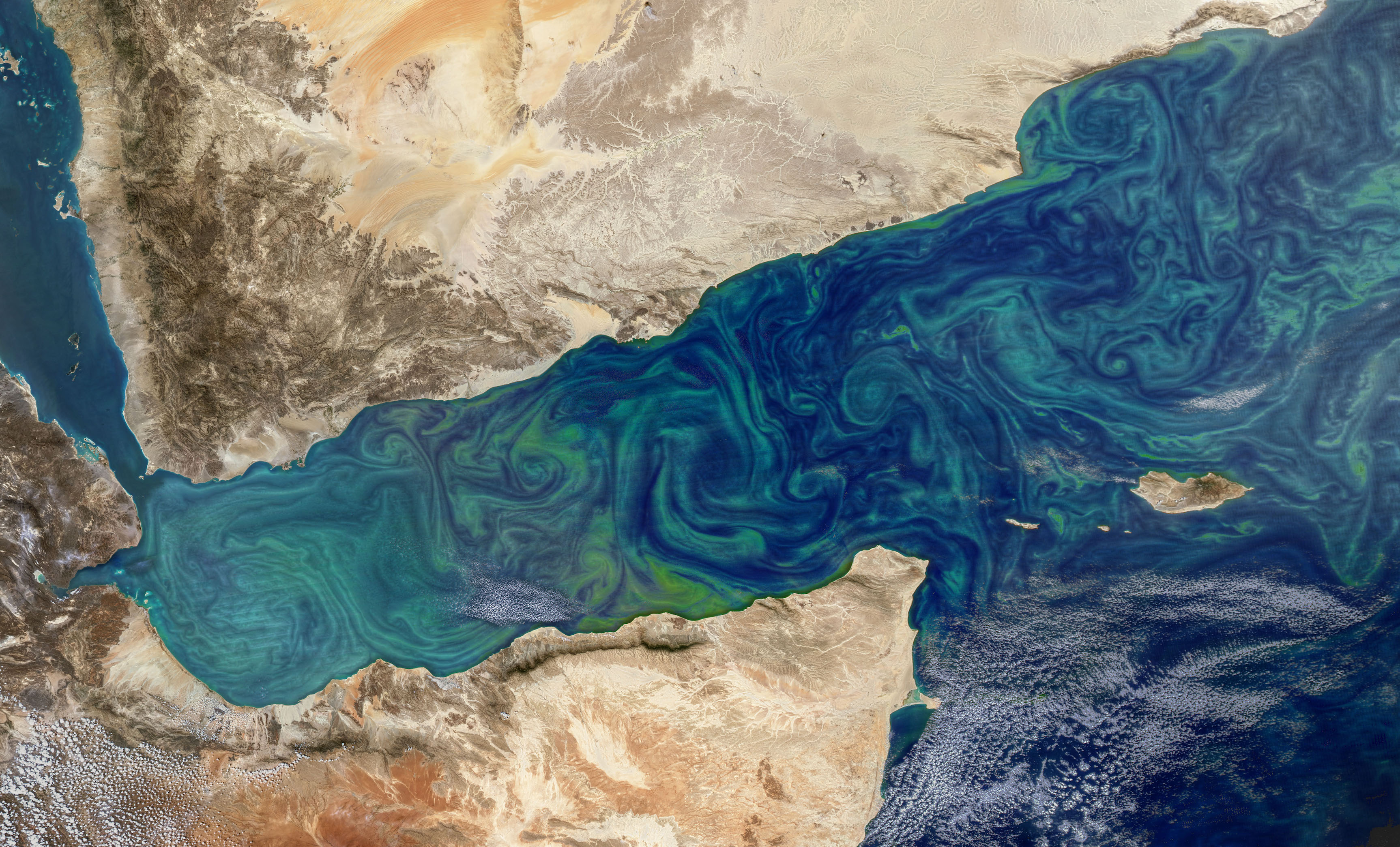 Today's Image of the Day comes from the NASA Earth Observatory and features a look at a phytoplankton bloom in the Gulf of Aden in the Arabian Sea.
