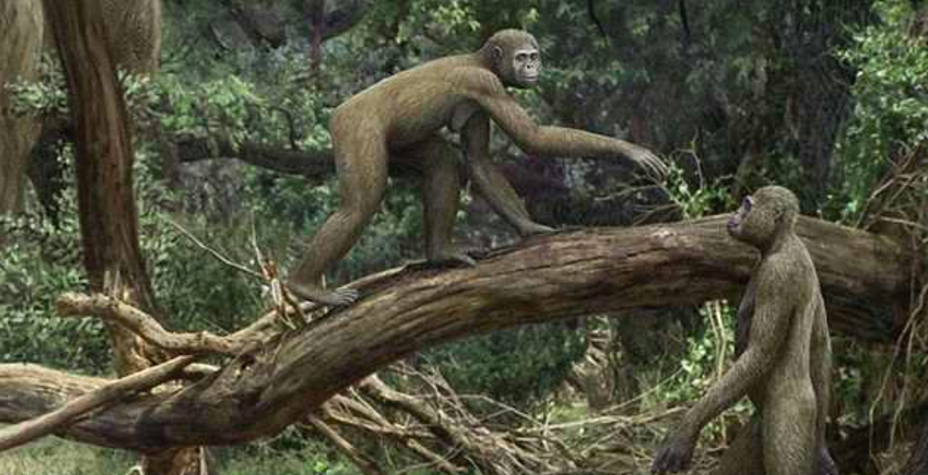 A new study has revealed that ancient hominids walked upright just like modern humans, but also had the ability to climb trees.