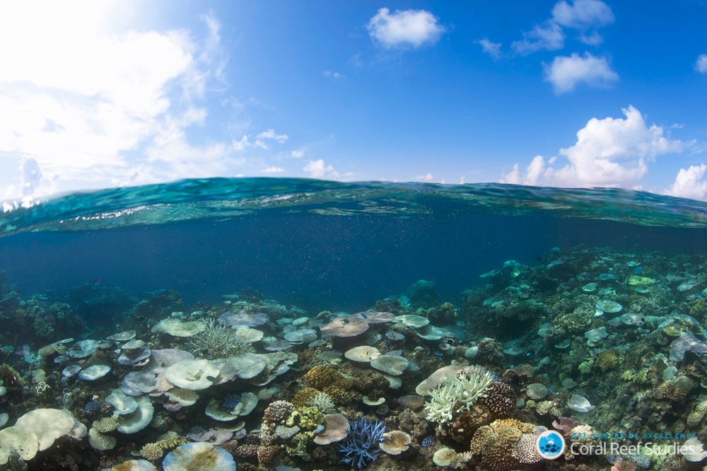 Coral bleaching events not only change the vibrant coral landscape of a reef, they can also decrease the variety of fish living in these ecosystems.