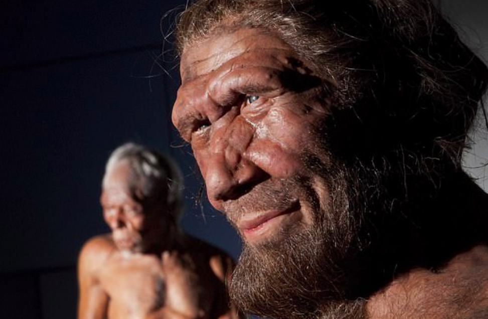 A protruding face with large nostrils enabled Neanderthals to adapt to cold weather and helped them breathe in more air when they were exerting themselves.