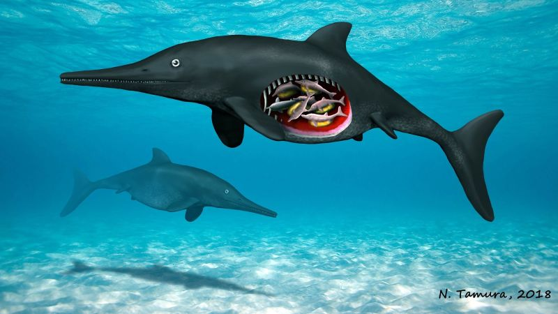 Eight fossilized embryos have been discovered in a pregnant ichthyosaur fossil, revealing that these reptiles gave birth to live offspring instead of laying eggs.