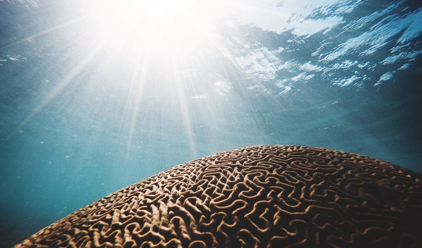 Warming ocean temperatures have caused marine heatwaves to increase in number, duration, and intensity over the past century.