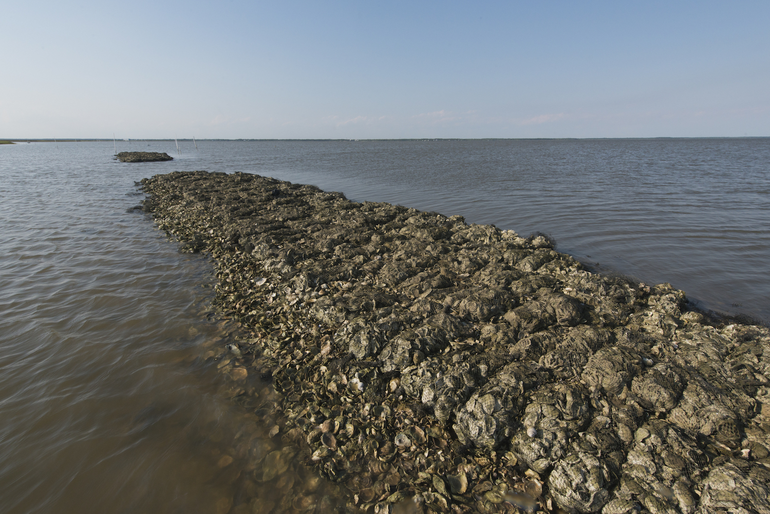 As climate change increases the risk of flooding along the Gulf Coast, researchers have found that oyster reef and marsh restoration projects could cost effectively reduce this risk.