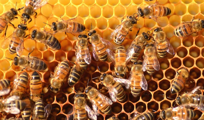 The results of a new study reveal the detrimental and stunting effects that a lifelong exposure to pesticides has on worker bees.