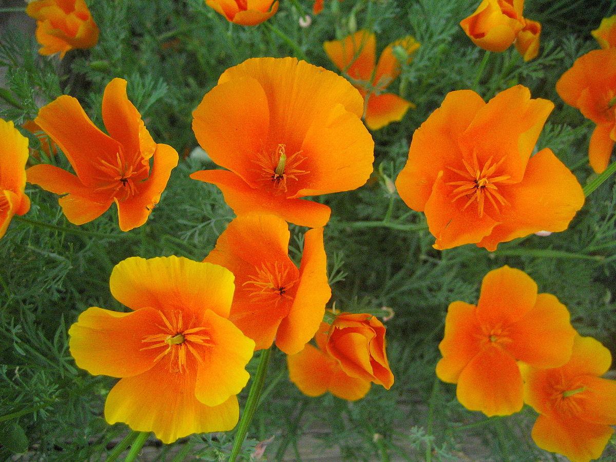 Цветы их назначение фото