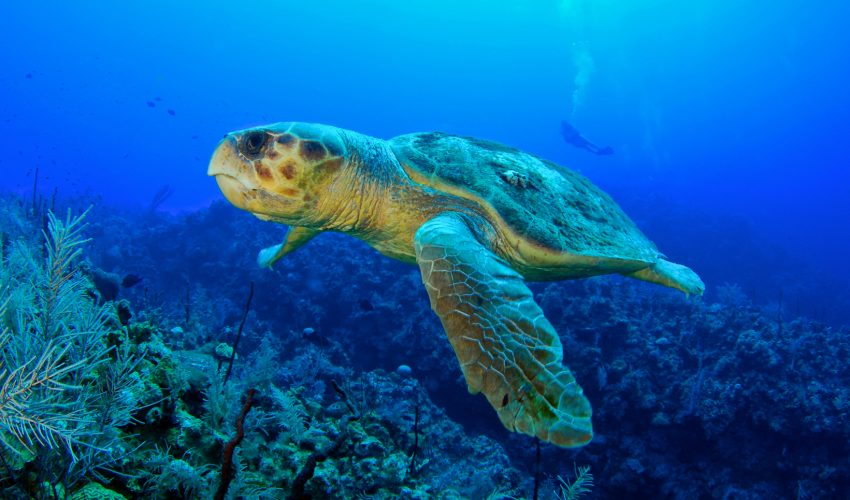 Scientists from the University of North Carolina at Chapel Hill have found that loggerhead turtles find their nesting grounds by using the Earth's magnetic field.