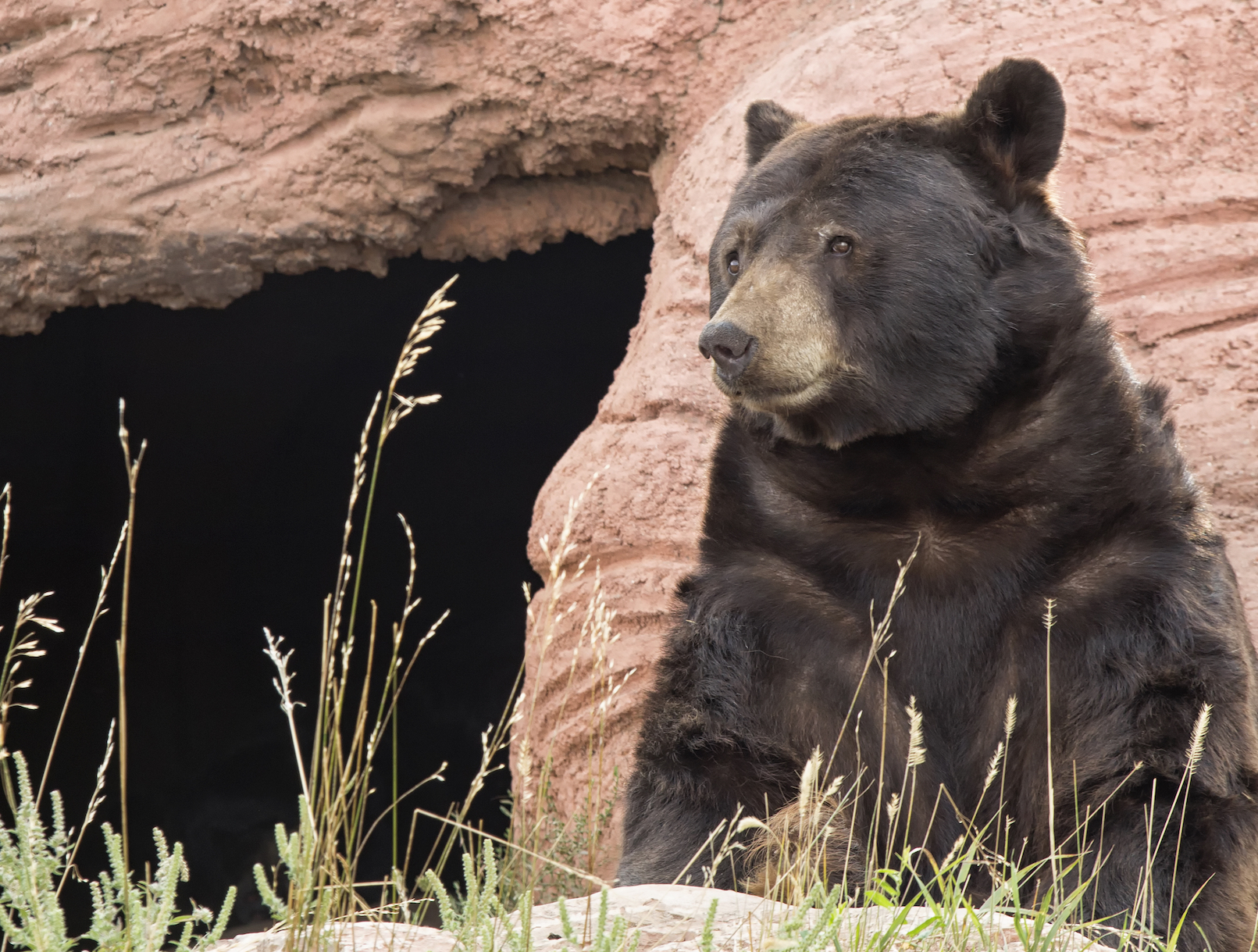 According to a new study, archaeologists have found evidence that ancient humans attacked massive bears and took over their caves.