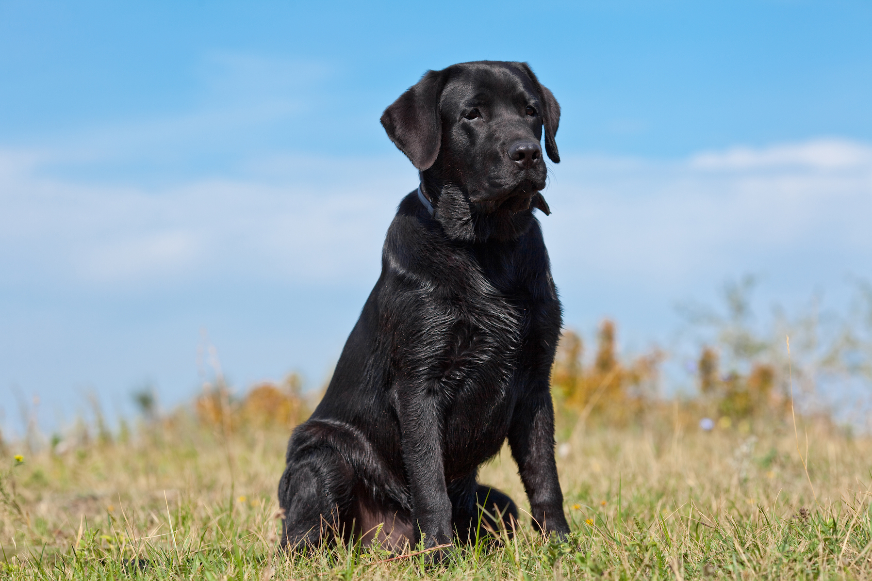 Researchers from the GFZ German Research Centre for Geosciences set out to see if animals, including domestic family dogs, can accurately predict earthquakes.