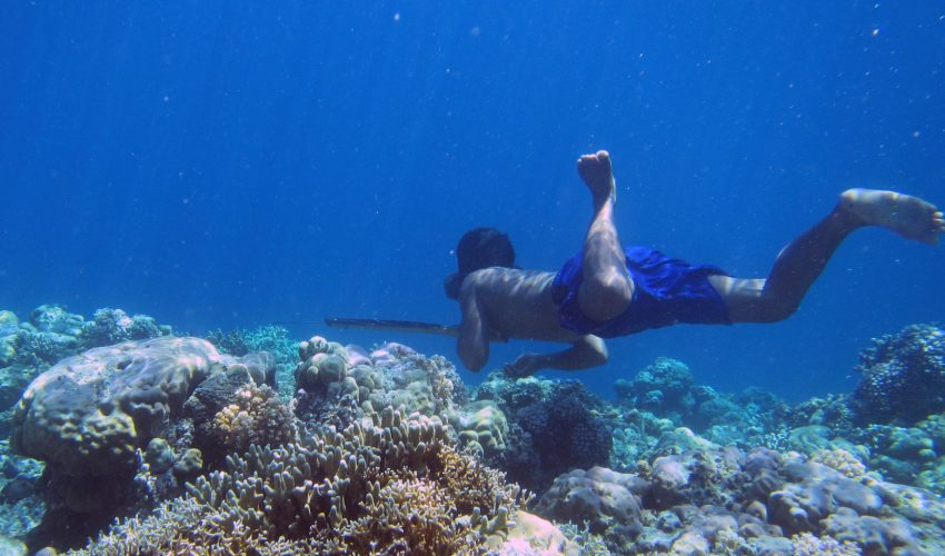 Enlarged spleen key to diving endurance of Indonesian 'sea nomads'