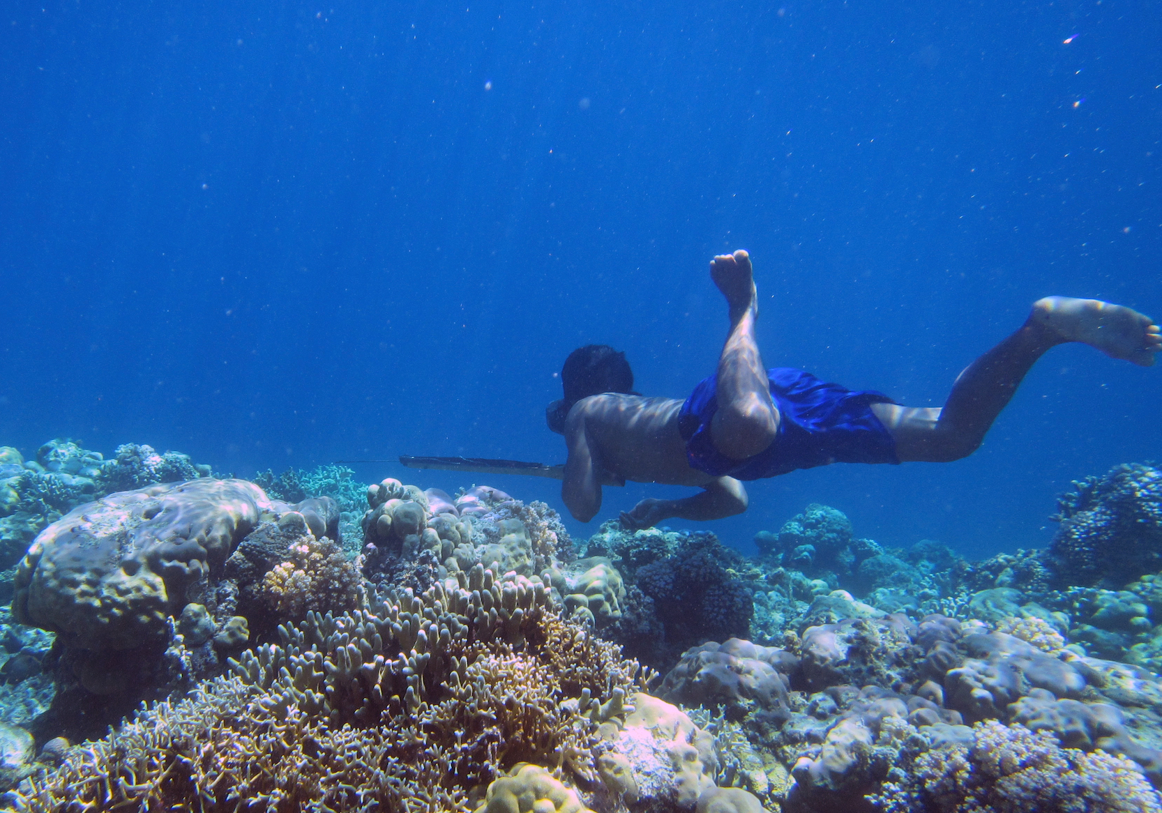 New research published in the journal Cell has found evidence that the Bajau people of Indonesia have genetically adapted to diving, a scientific first.