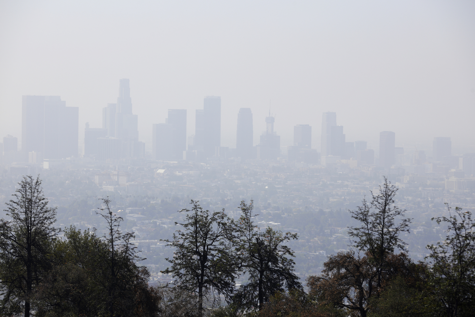 According to the American Lung Association, at least 41 percent of residents in the United States are exposed to harmful smog and air pollution.