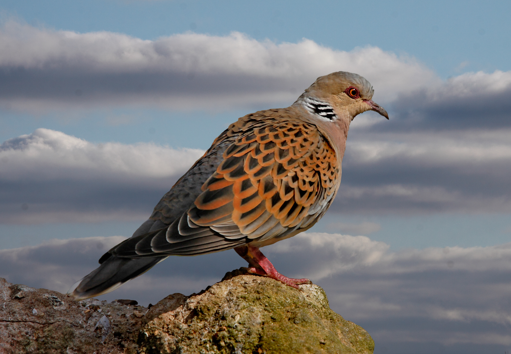 According to the State of the World's Bird Report,as many as one in eight bird species is now at risk of extinction.