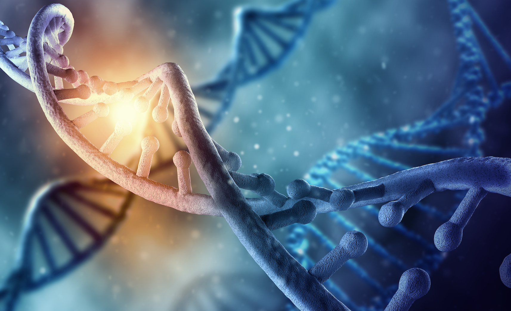 "In an exciting new discovery, researchers have identified an elusive new structure of DNA called the ""i-motif"" for the first time in living cells."