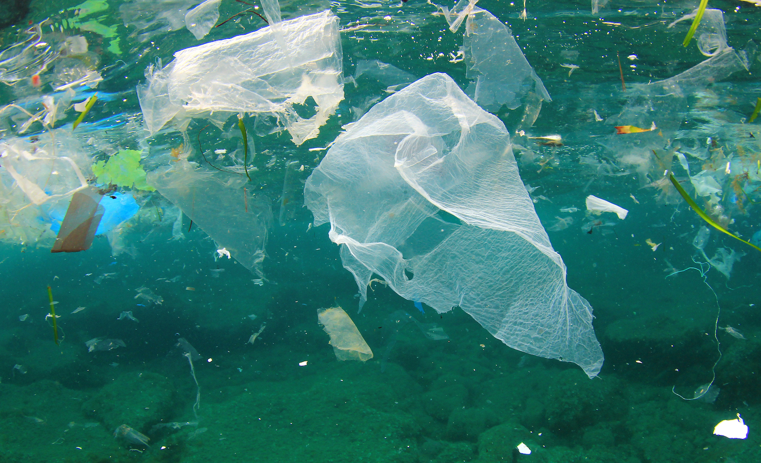 As if the growing volume of plastic polluting the world's oceans wasn't enough of a cause for concern, a new study has found that harmful bacteria can quickly grow on plastic bags in the ocean in as little as 40 days.