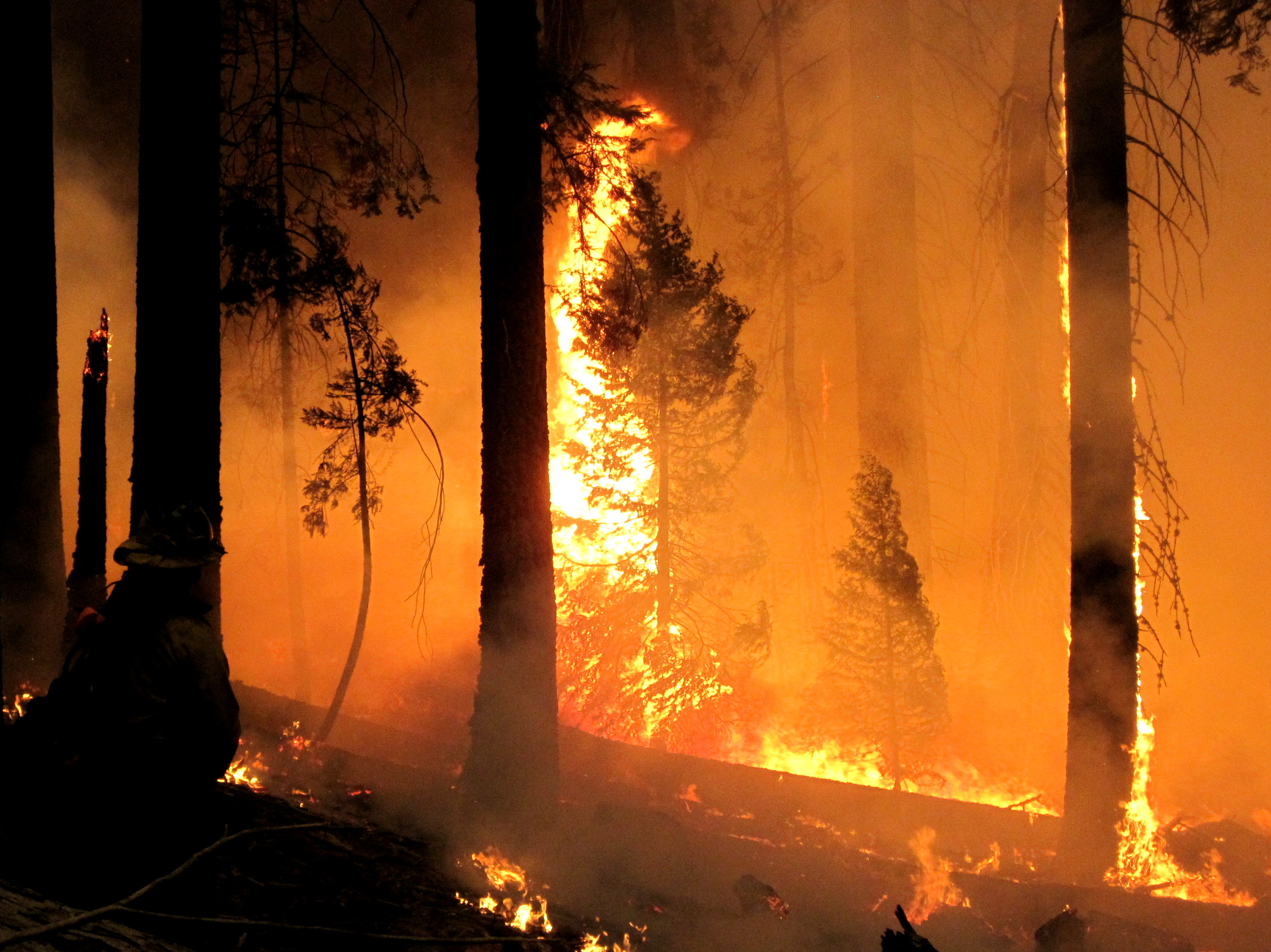 New research shows that forest thinning from wildfires may be a saving grace for California as evapotranspiration has decreased over the years, saving billions of gallons of water.