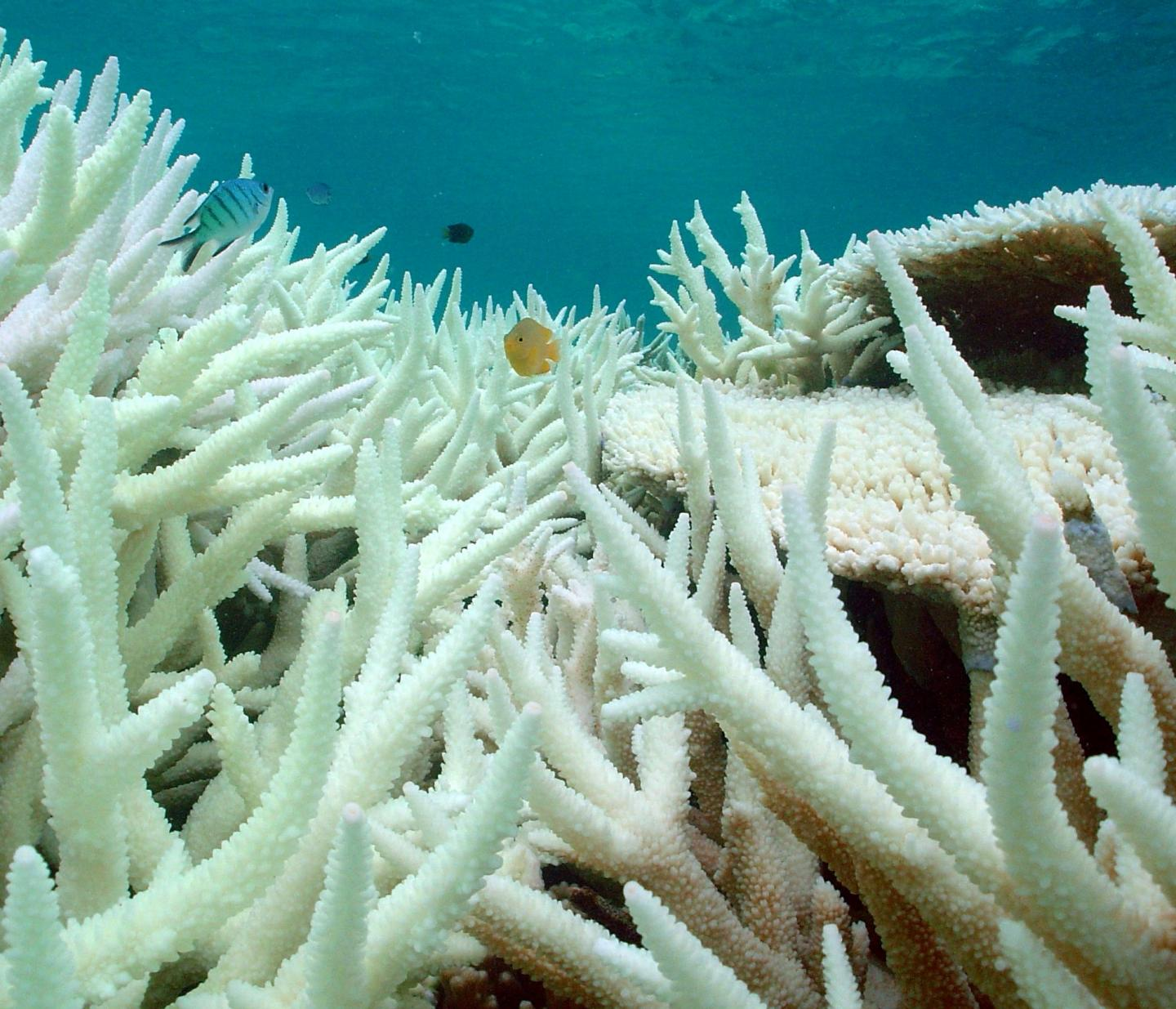 Reefs that experience frequent temperature changes are better equipped to withstand coral bleaching, a new study found.