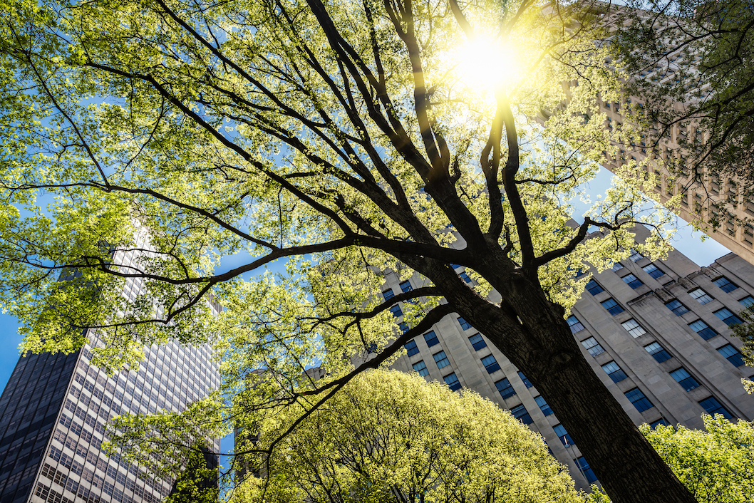 The U.S. Forest Service is reporting that trees are rapidly vanishing in urban regions across the United States. Between 2009 and 2014, approximately 175,000 acres of urban tree cover, which is the equivalent of 36 million trees, was lost annually.