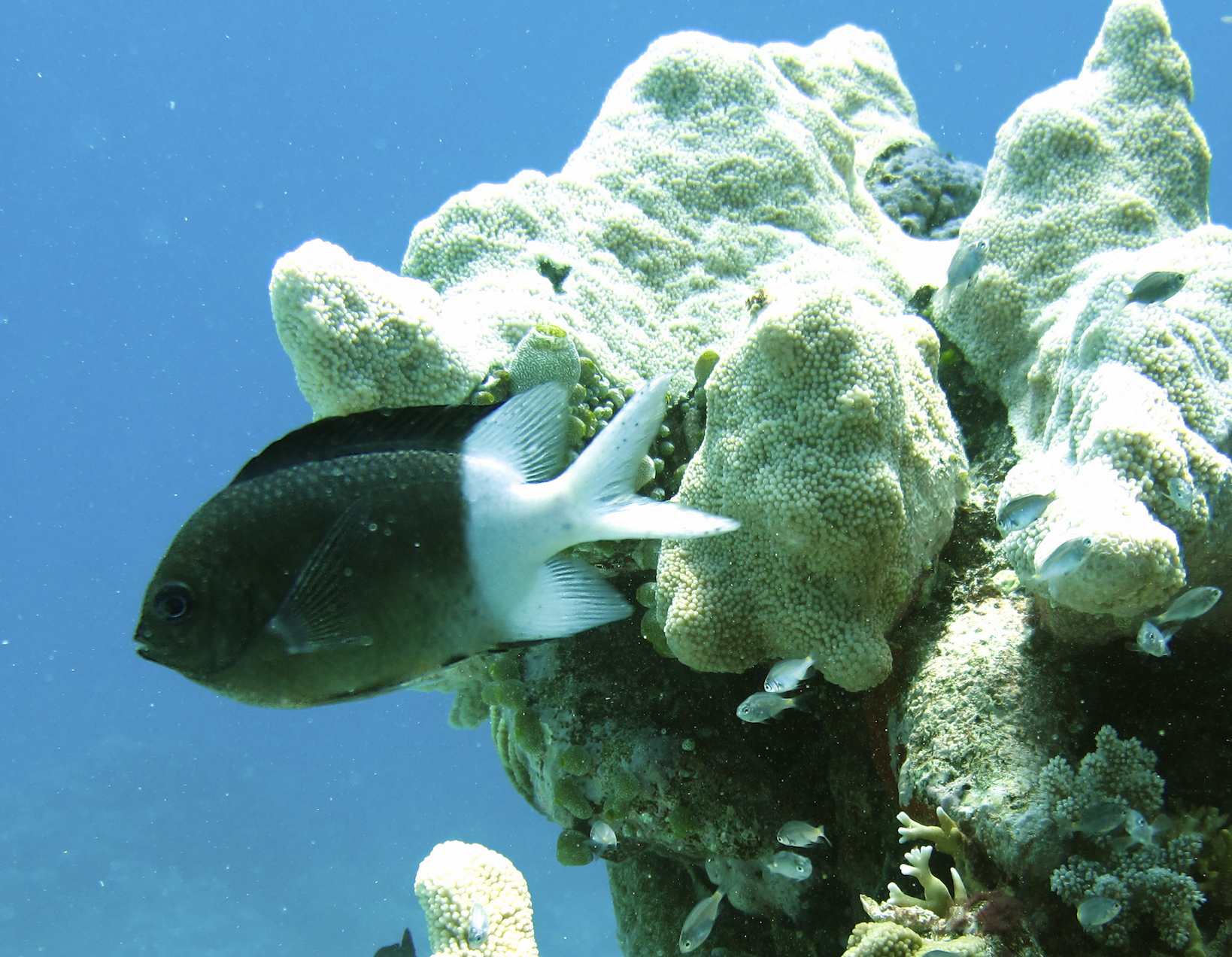 A team of researchers is reporting that reef fish are more equipped to handle global warming than previously realized.