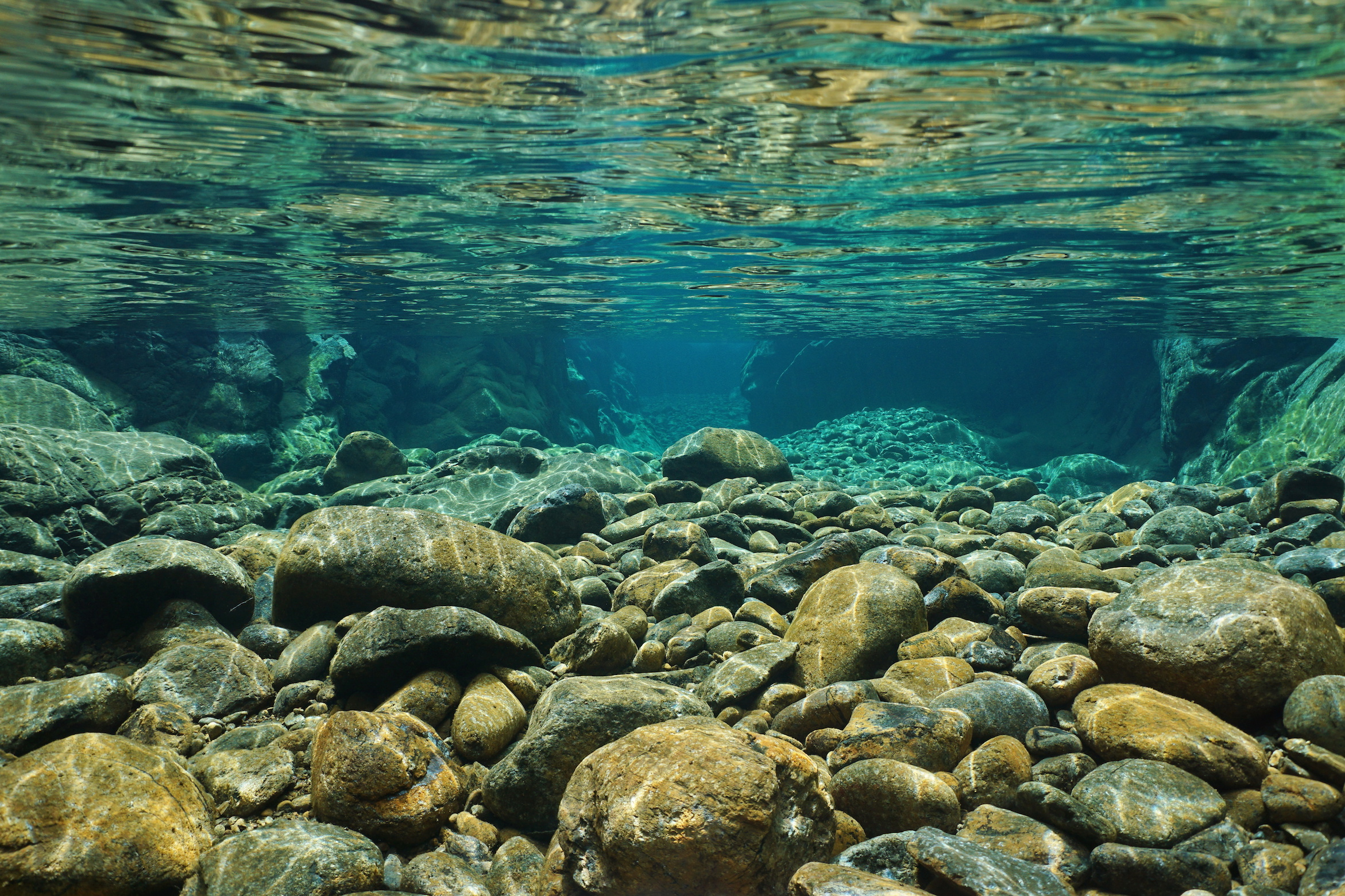 A new study conducted by researchers from the University of Minnesota has found that freshwater ecosystems can filter out both carbon and phosphorous pollution before the water reaches the ocean.