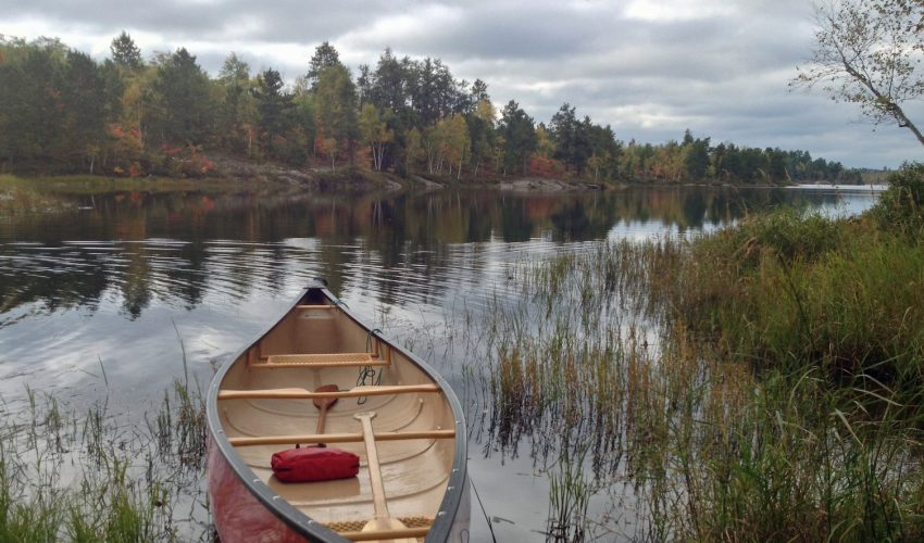 A new study on methane emissions from lakes found that tree debris like pine needles suppress methane, while debris from plants in wetlands could double methane emissions in lakes over the next 50 years.