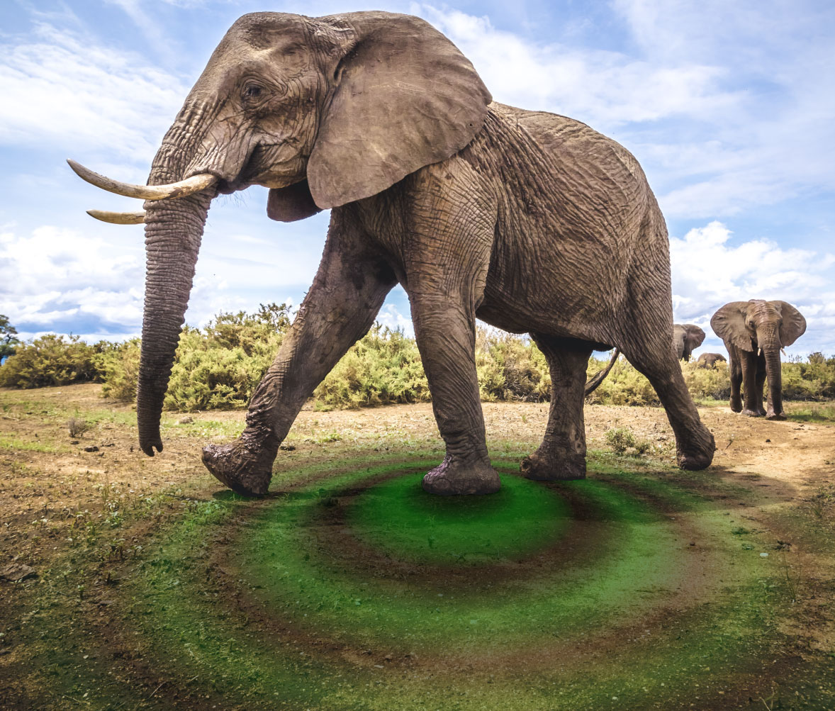 Researchers have analyzed vibrations in the ground that are produced by elephants as they move around, which may lead to the development of seismic monitoring systems that can detect when elephants are in danger.