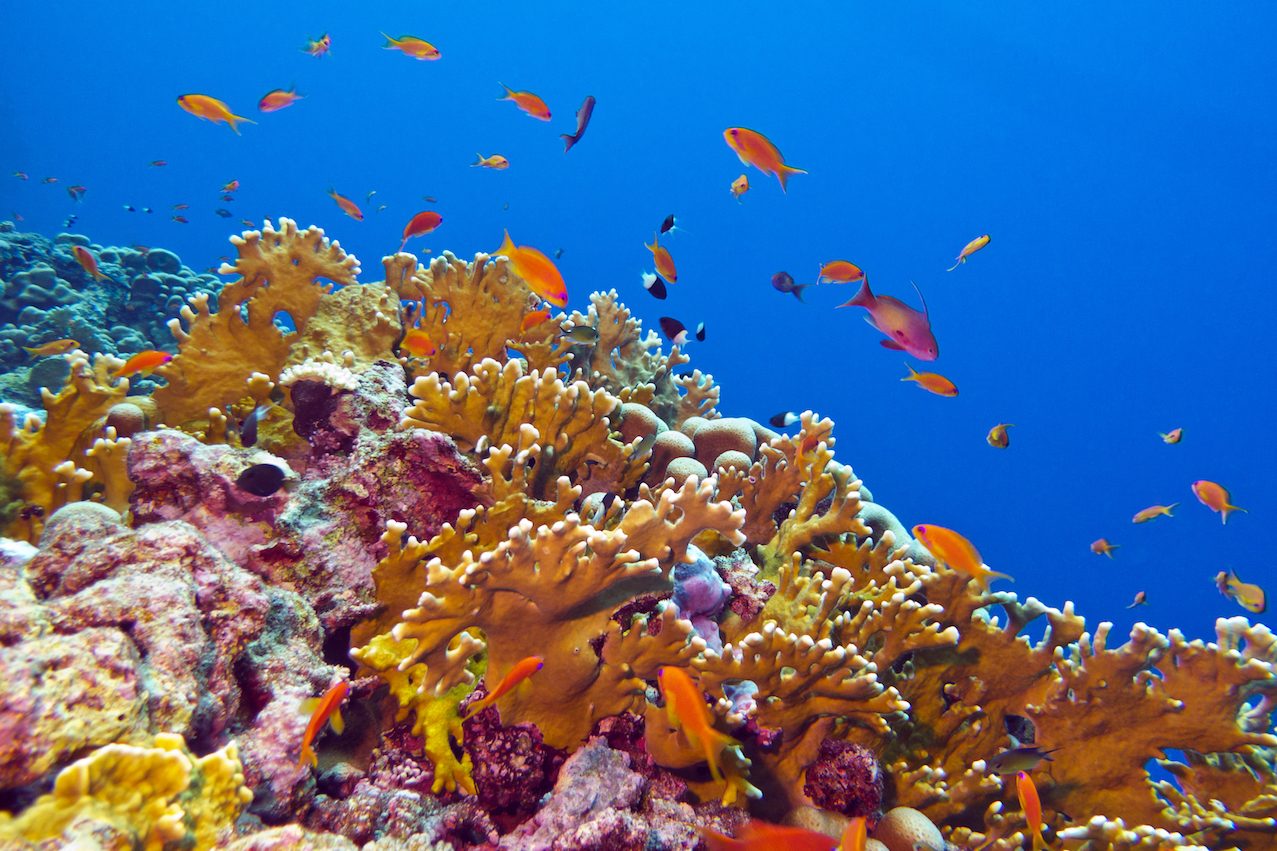 A new study in the eastern Caribbean is demonstrating that marine protected areas can, in fact, be successful in defending coral reefs from the harmful impacts of global climate change.