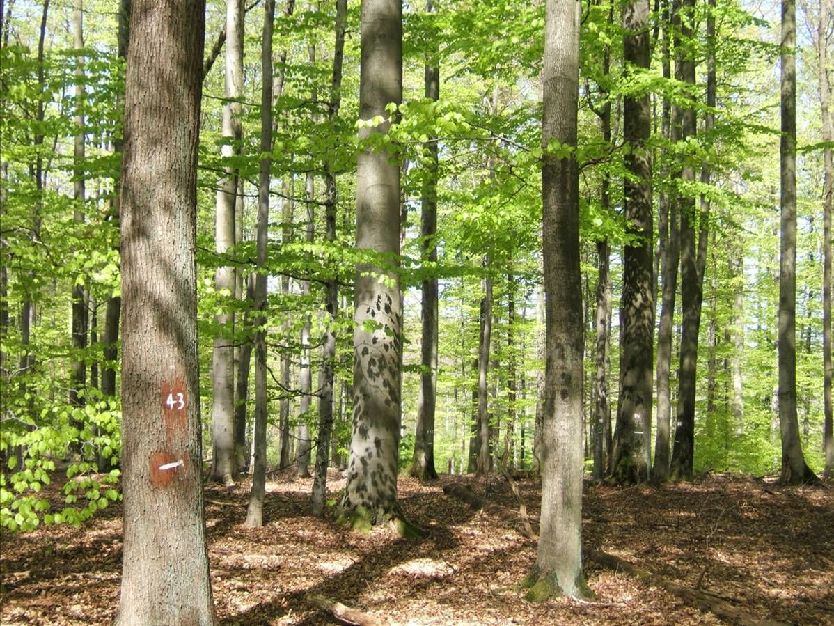 Forests with a diverse mix of plants and trees are more productive than forests with only a single kind of species, also known as a monoculture.