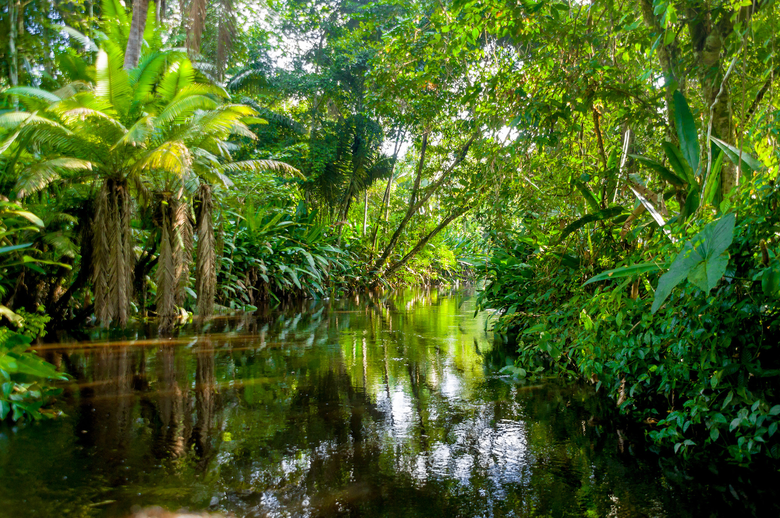 A new study has found that many diverse tropical species now found in Latin America originated in Amazonian rainforests.
