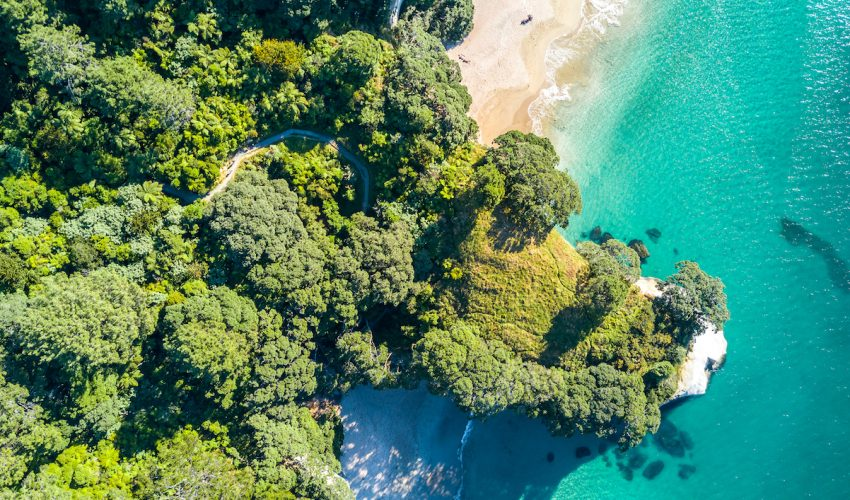 Researchers at the University of Helsinki have found that forests are expanding in many countries, which represents a state of well-being in these nations.